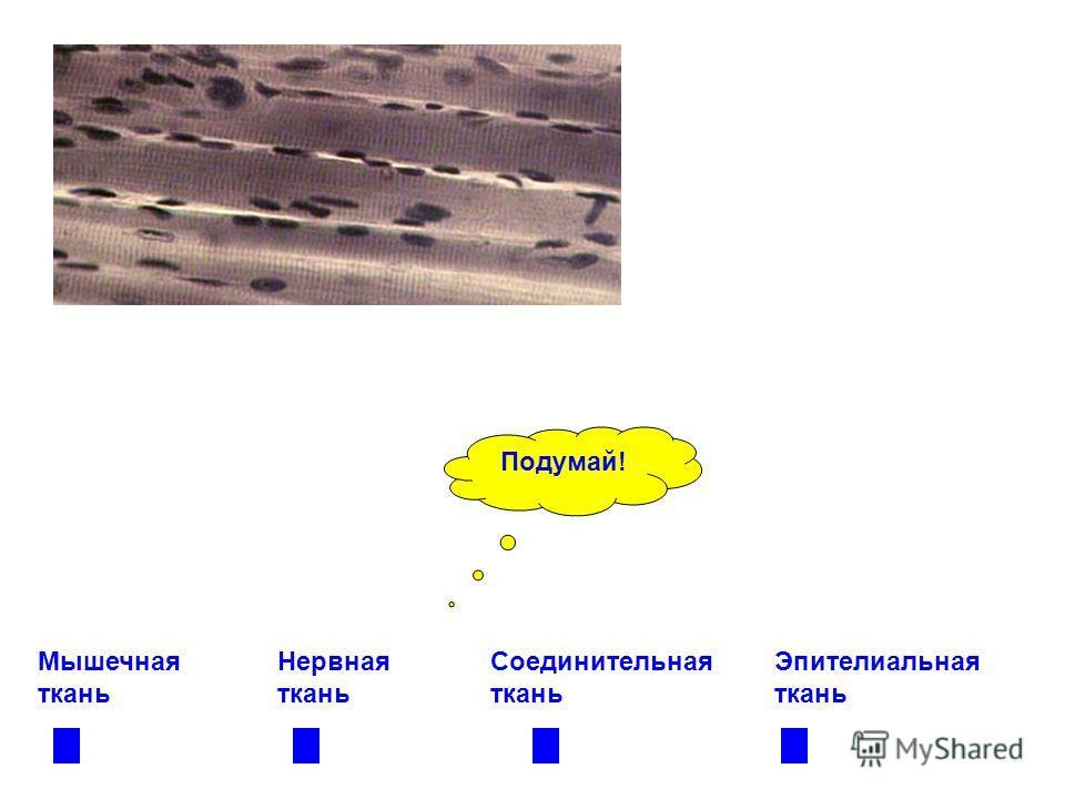 Мышечная ткань Нервная ткань Соединительная ткань Эпителиальная ткань Подумай!