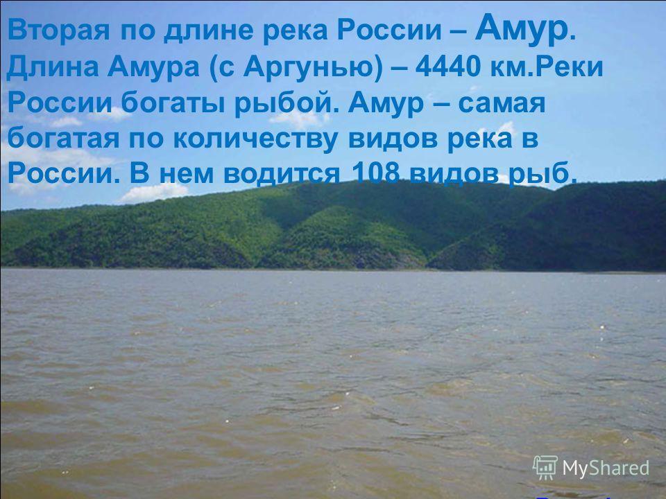 Вторая по длине река России – Амур. Длина Амура (с Аргунью) – 4440 км.Реки России богаты рыбой. Амур – самая богатая по количеству видов река в России. В нем водится 108 видов рыб. Река Амур