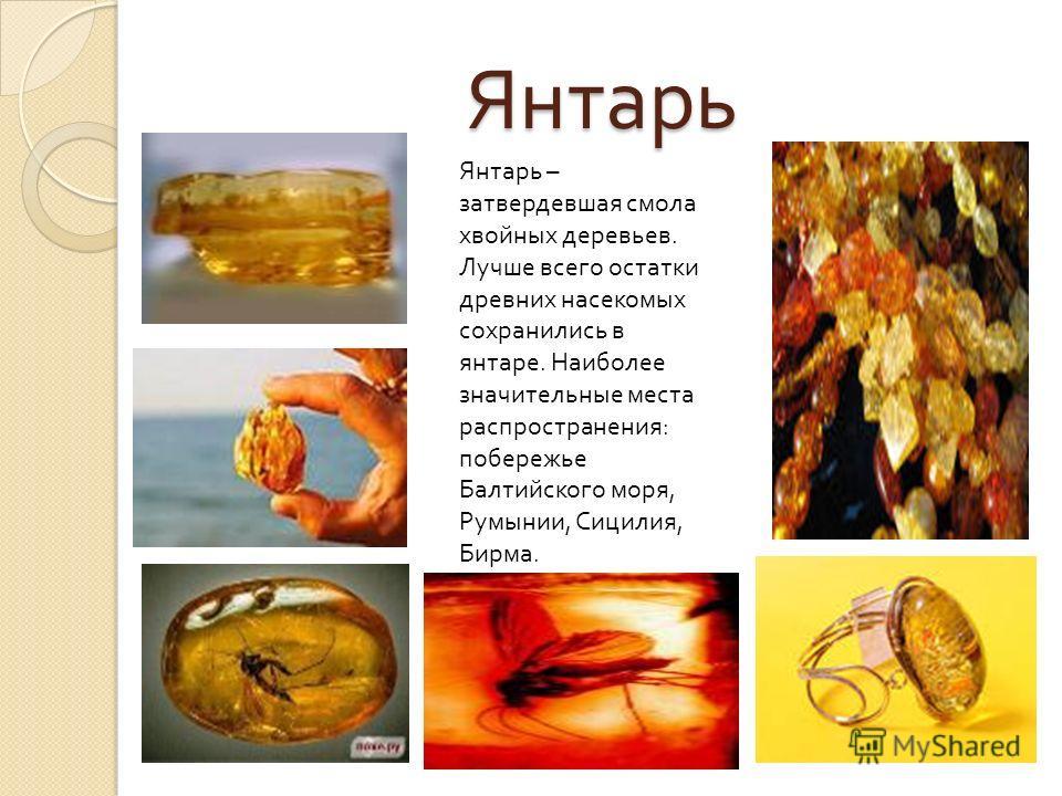 Янтарь Янтарь – затвердевшая смола хвойных деревьев. Лучше всего остатки древних насекомых сохранились в янтаре. Наиболее значительные места распространения: побережье Балтийского моря, Румынии, Сицилия, Бирма.