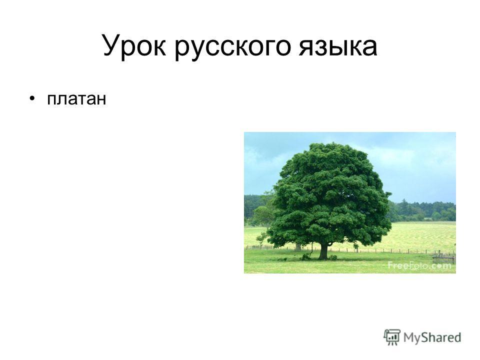 Урок русского языка платан