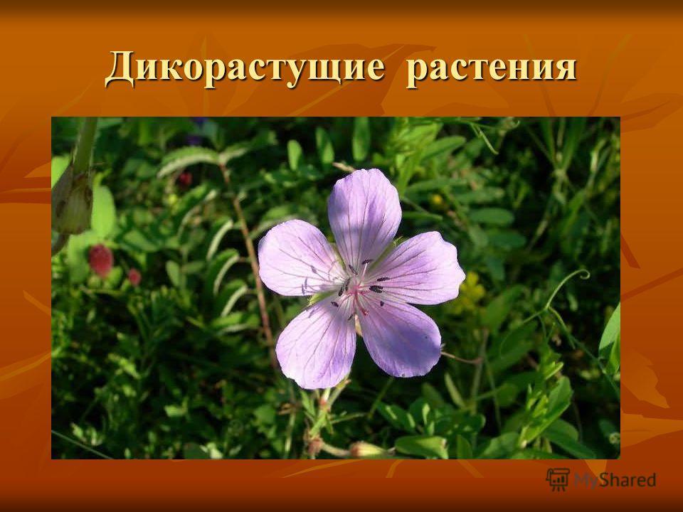 Дикорастущие растения