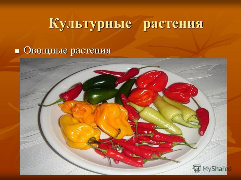 Культурные растения Культурные растения Овощные растения Овощные растения