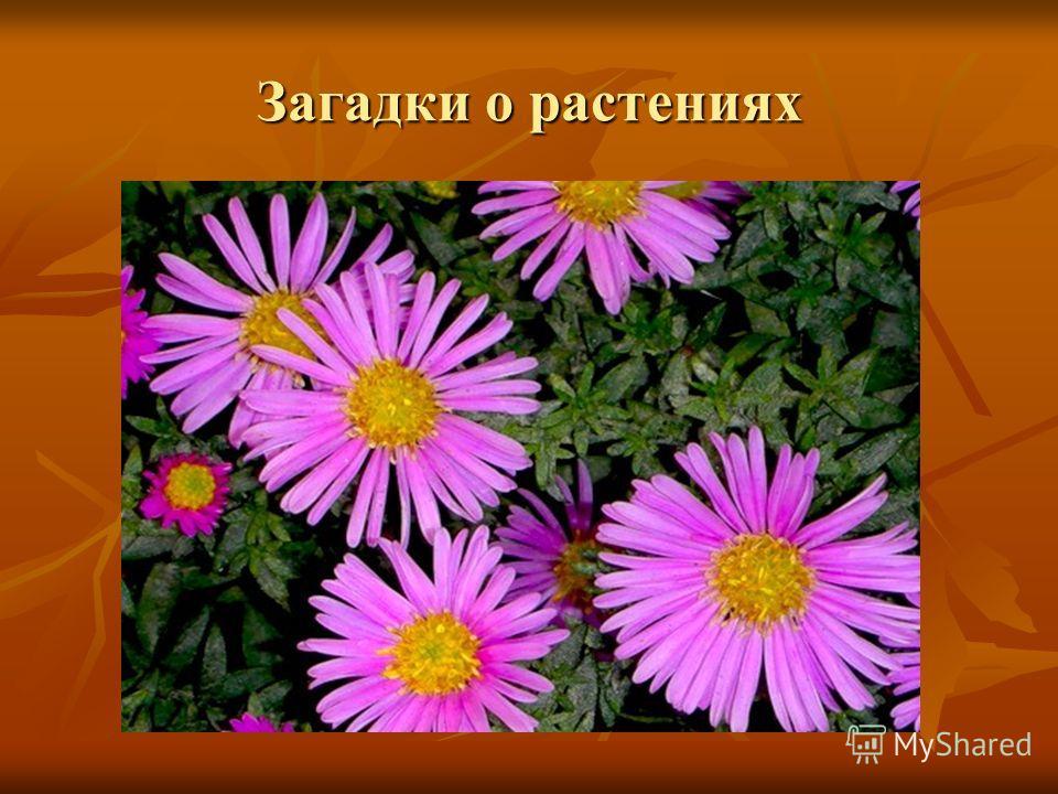 Загадки о растениях
