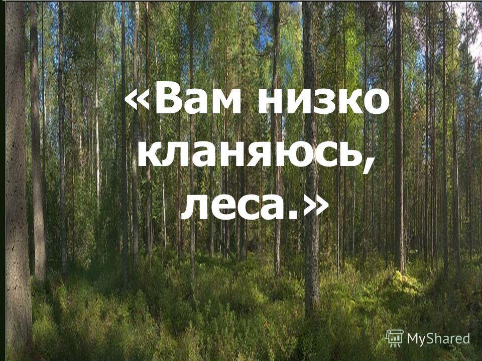 «Вам низко кланяюсь, леса» «Вам низко кланяюсь, леса.»