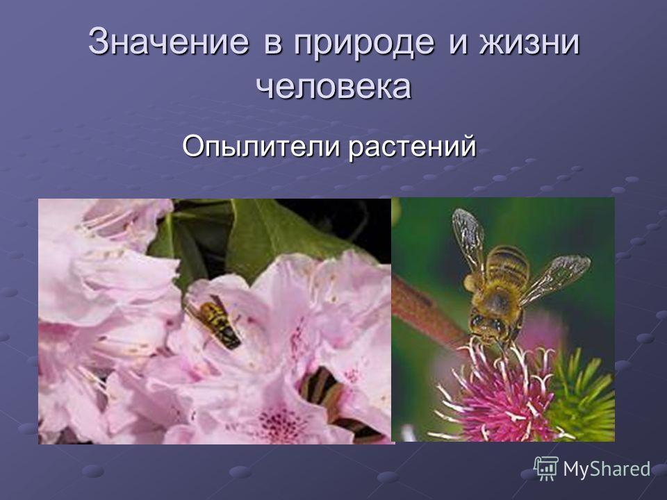 Значение в природе и жизни человека Опылители растений