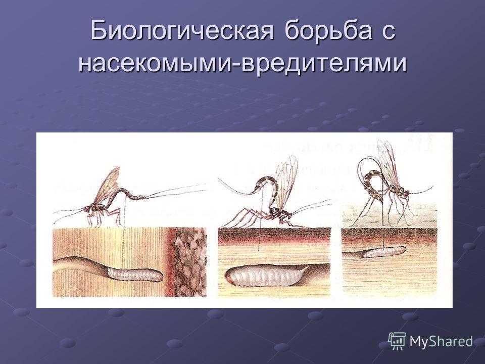Биологическая борьба с насекомыми-вредителями