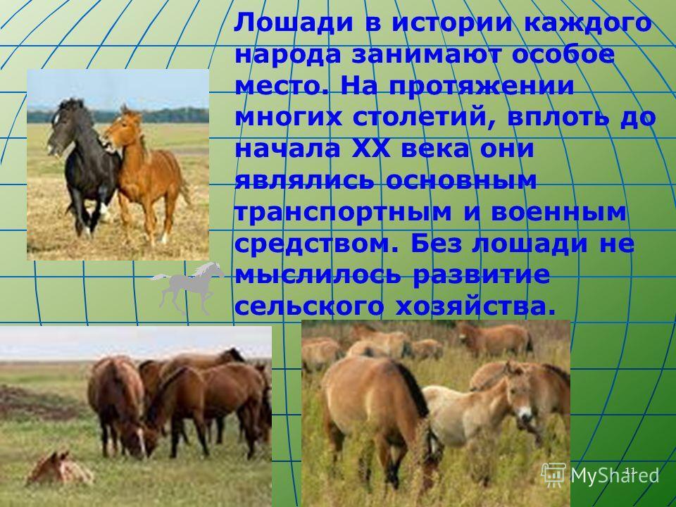 11 Лошади в истории каждого народа занимают особое место. На протяжении многих столетий, вплоть до начала ХХ века они являлись основным транспортным и военным средством. Без лошади не мыслилось развитие сельского хозяйства.