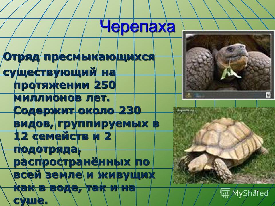 19 Черепаха Отряд пресмыкающихся существующий на протяжении 250 миллионов лет. Содержит около 230 видов, группируемых в 12 семейств и 2 подотряда, распространённых по всей земле и живущих как в воде, так и на суше.