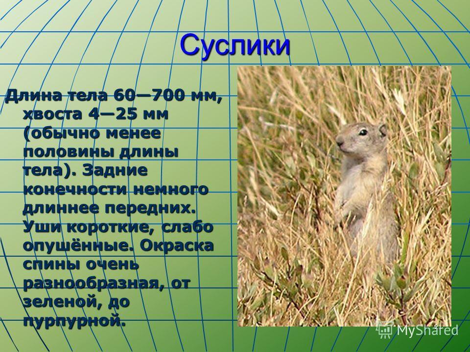 Суслики Длина тела 60700 мм, хвоста 425 мм (обычно менее половины длины тела). Задние конечности немного длиннее передних. Уши короткие, слабо опушённые. Окраска спины очень разнообразная, от зеленой, до пурпурной. 21