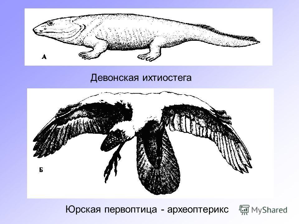 Девонская ихтиостега Юрская первоптица - археоптерикс