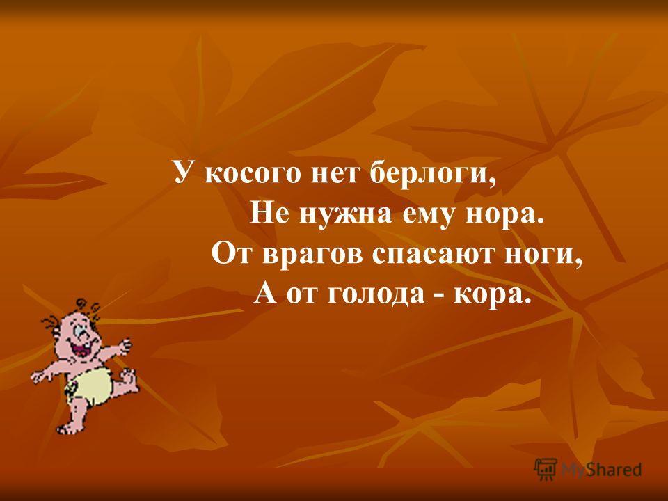 У косого нет берлоги, Не нужна ему нора. От врагов спасают ноги, А от голода - кора.