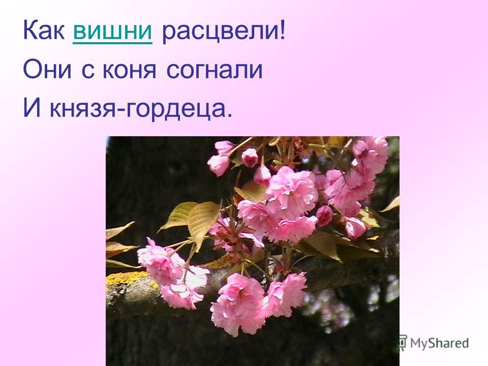 Как вишни расцвели!вишни Они с коня согнали И князя-гордеца.
