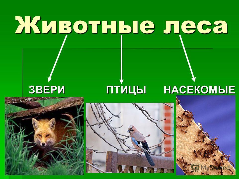 Животные леса ЗВЕРИ ПТИЦЫ НАСЕКОМЫЕ