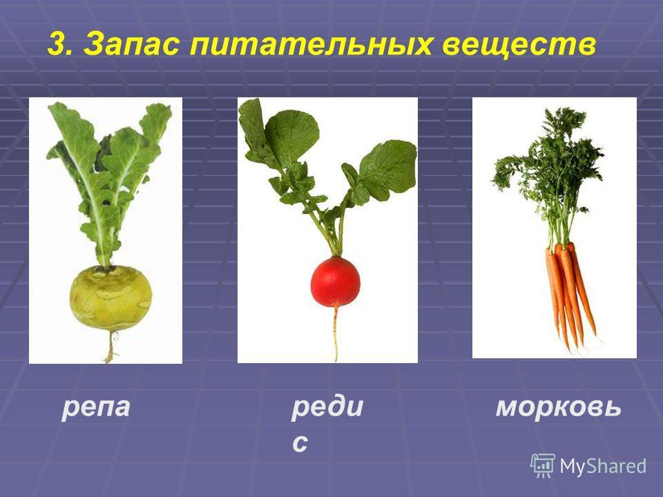 3. Запас питательных веществ репареди с морковь