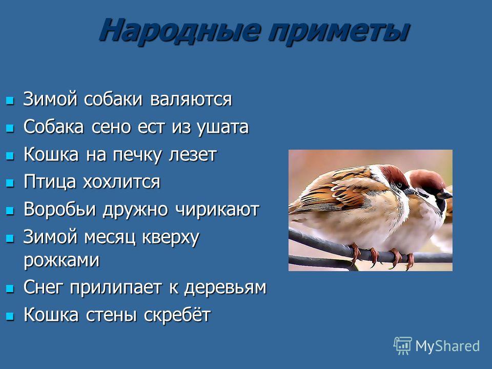 Народные приметы Народные приметы Зимой собаки валяются Зимой собаки валяются Собака сено ест из ушата Собака сено ест из ушата Кошка на печку лезет Кошка на печку лезет Птица хохлится Птица хохлится Воробьи дружно чирикают Воробьи дружно чирикают Зи