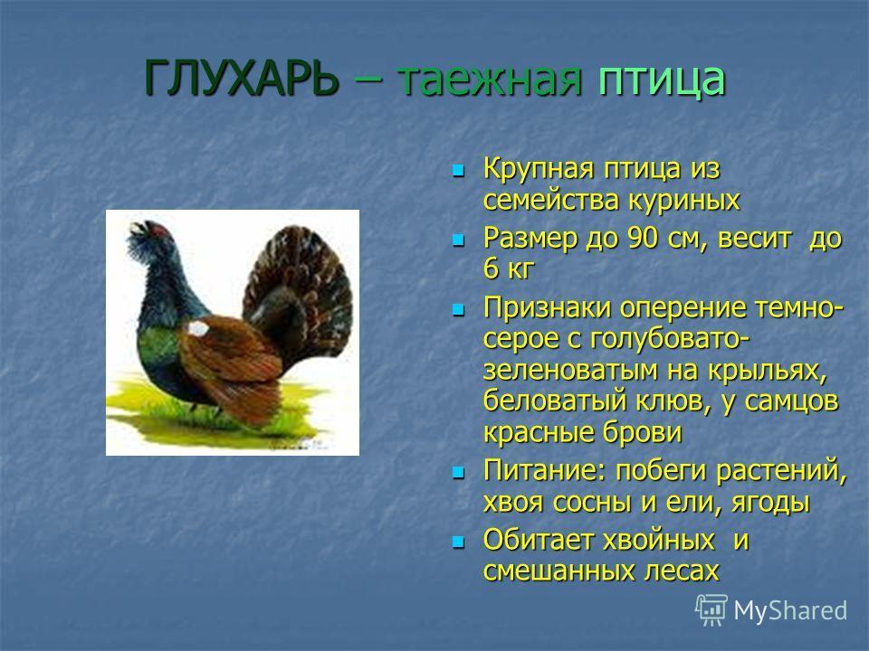 ГЛУХАРЬ – таежная птица Крупная птица из семейства куриных Крупная птица из семейства куриных Размер до 90 см, весит до 6 кг Размер до 90 см, весит до 6 кг Признаки оперение темно- серое с голубовато- зеленоватым на крыльях, беловатый клюв, у самцов