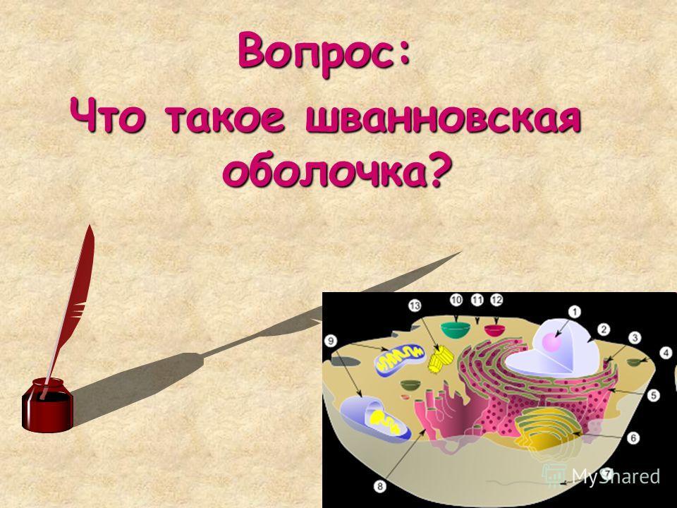 Вопрос: Что такое шванновская оболочка?