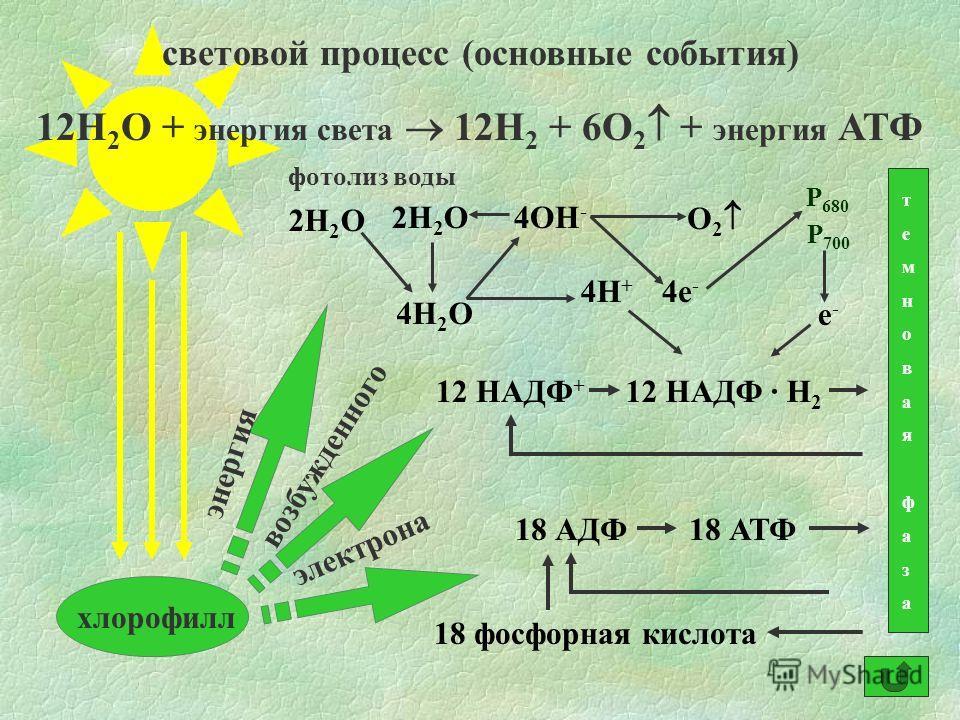 световой процесс (основные события) 12Н 2 О + энергия света 12Н 2 + 6О 2 + энергия АТФ хлорофилл 18 АДФ18 АТФ 18 фосфорная кислота 12 НАДФ + 12 НАДФ · Н 2 темновая фазатемновая фаза энергия возбужденного электрона фотолиз воды 2Н 2 О 4Н 2 О 4ОН - 4Н