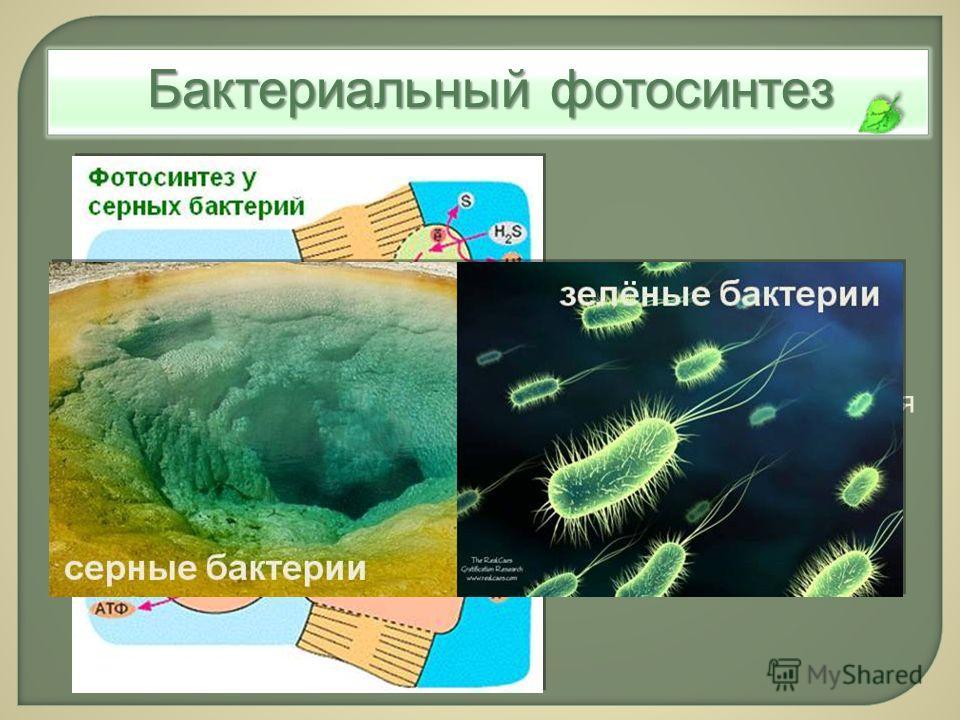 Бактериальный фотосинтез Бескислородный фотосинтез: в качестве донора электрона используются соединения серы или молекулярный водород.