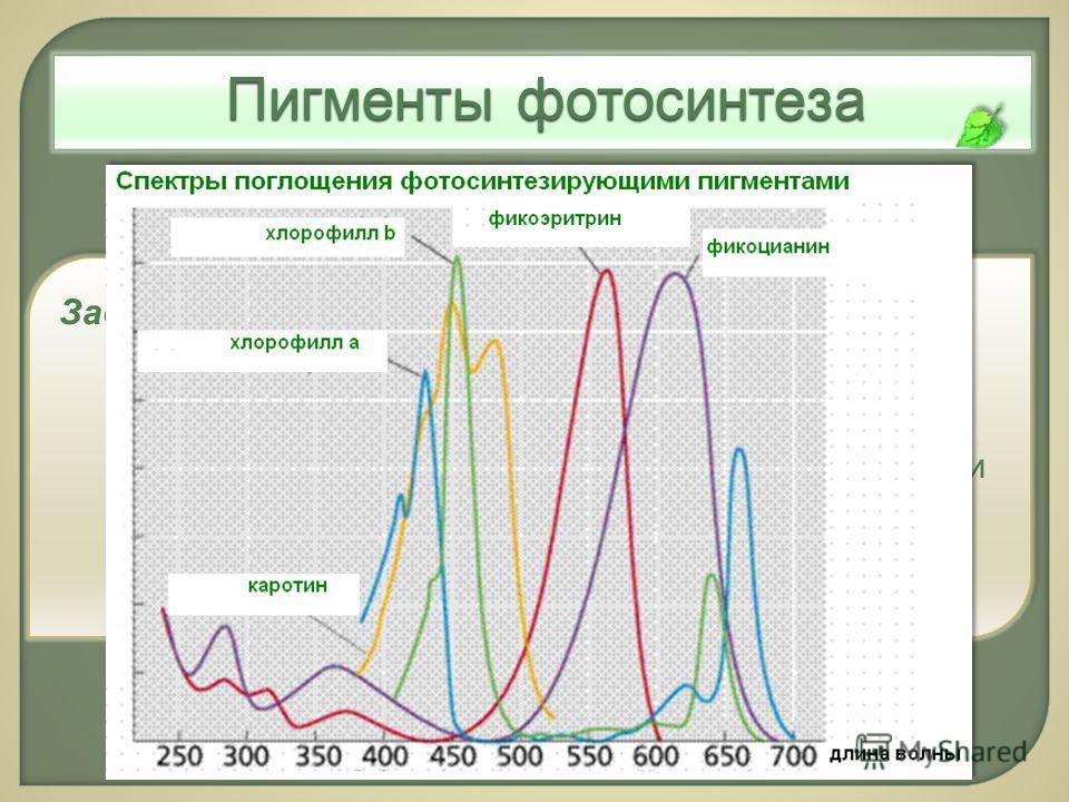 Пигменты фотосинтеза Задание 1. Вы – учёный-биофизик, изучаете фотосинтезирующие пигменты растений. В ходе исследований Вы получили некоторые данные. Изучите эту информацию, составьте графическую схему «Спектры поглощения фотосинтезирующими пигментам