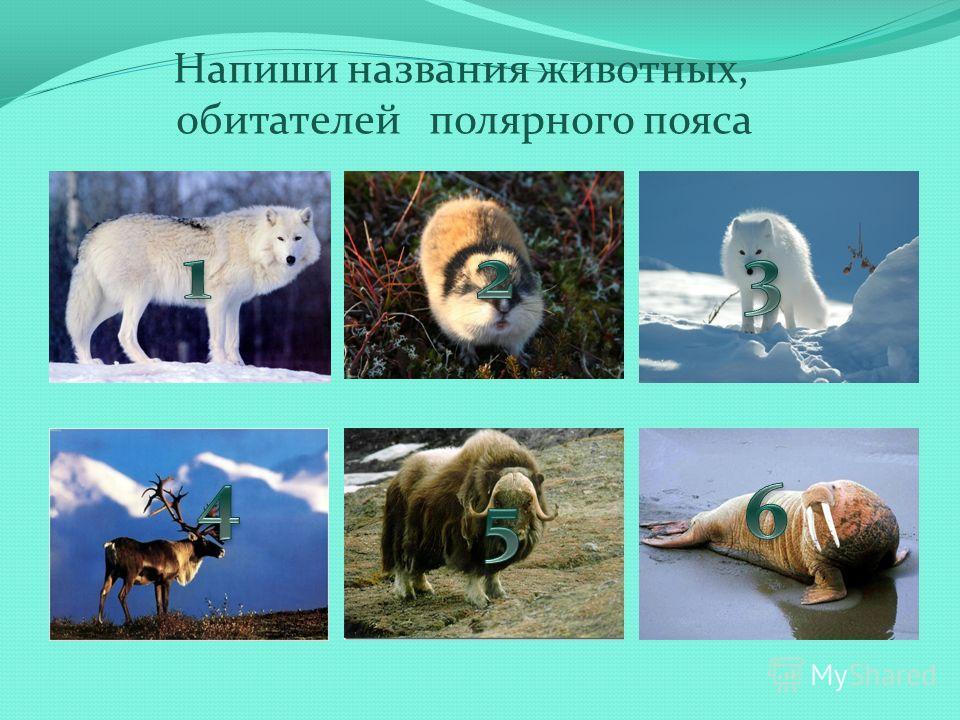 Напиши названия животных, обитателей полярного пояса