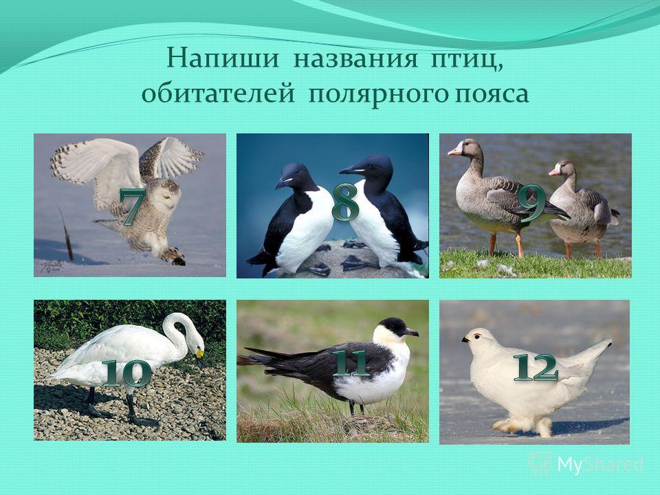 Напиши названия птиц, обитателей полярного пояса