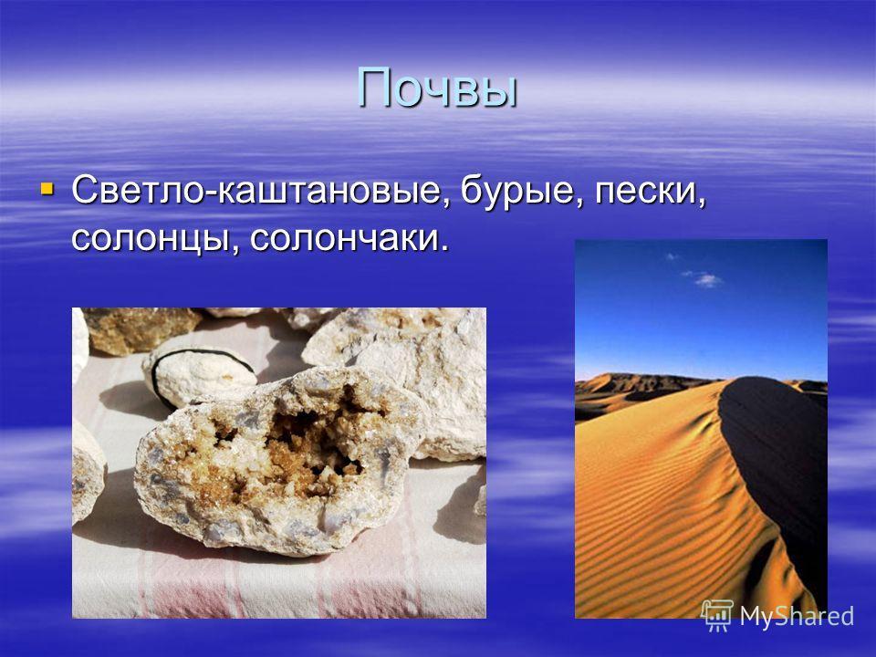Почвы Светло-каштановые, бурые, пески, солонцы, солончаки. Светло-каштановые, бурые, пески, солонцы, солончаки.