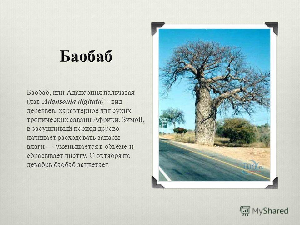 Картинки африканской саванны зимой