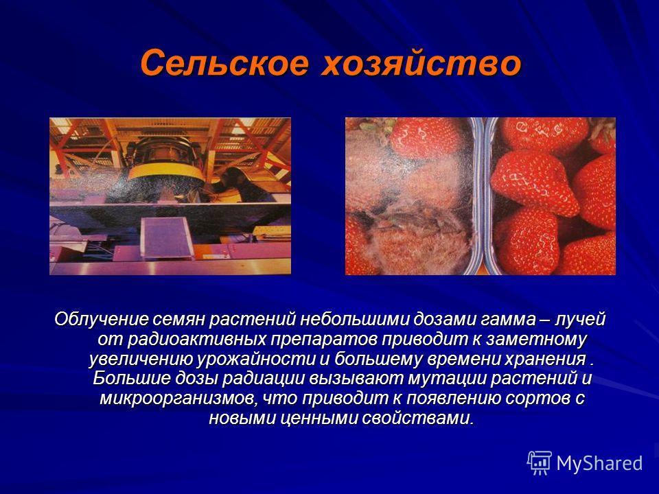 Медицина Методы диагностики и терапии показали свою высокую эффективность. При облучении раковых клеток γ – лучами они прекращают своё деление. И если раковое заболевание находится на начальной стадии, то лечение является успешным Малые количества ра