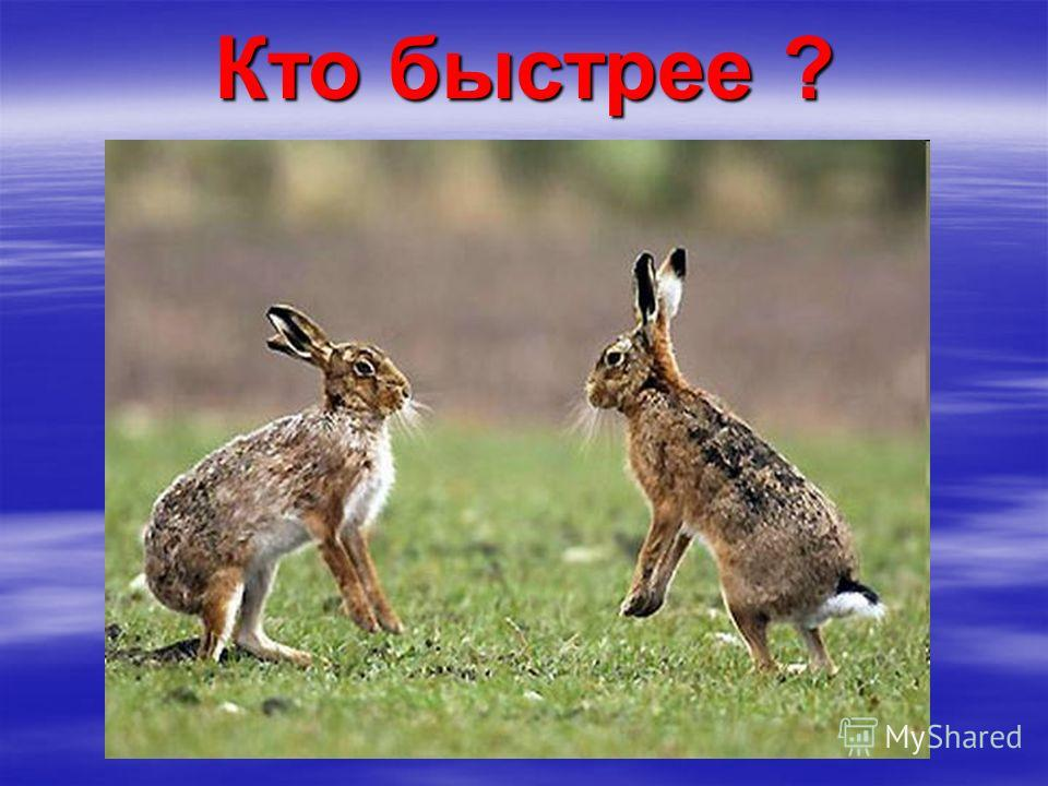 Кто быстрее ?