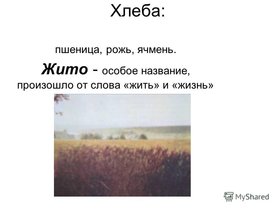 Хлеба: пшеница, рожь, ячмень. Жито - особое название, произошло от слова «жить» и «жизнь»