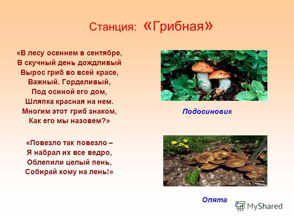 Станция: « Грибная » «В лесу осеннем в сентябре, В скучный день дождливый Вырос гриб во всей красе, Важный. Горделивый, Под осиной его дом, Шляпка красная на нем. Многим этот гриб знаком, Как его мы назовем?» Подосиновик Опята «Повезло так повезло –
