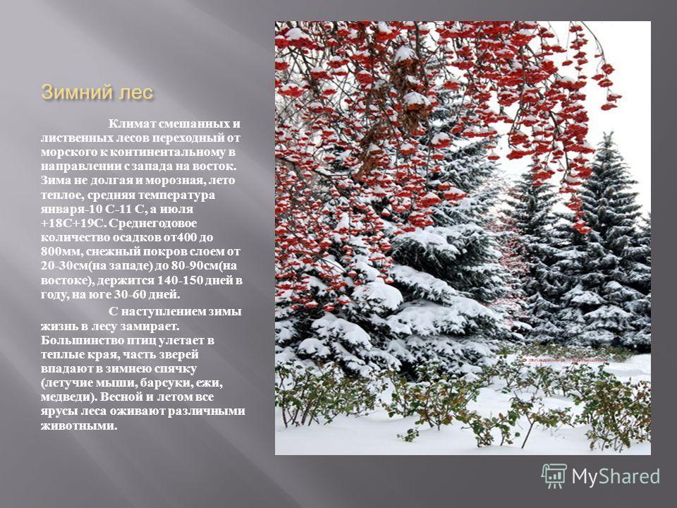 Зимний лес Климат смешанных и лиственных лесов переходный от морского к континентальному в направлении с запада на восток. Зима не долгая и морозная, лето теплое, средняя температура января -10 С -11 С, а июля +18 С +19 С. Среднегодовое количество ос