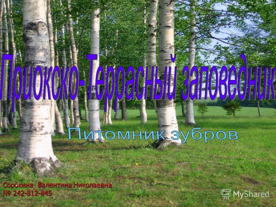Сорокина Валентина Николаевна 242-812-845