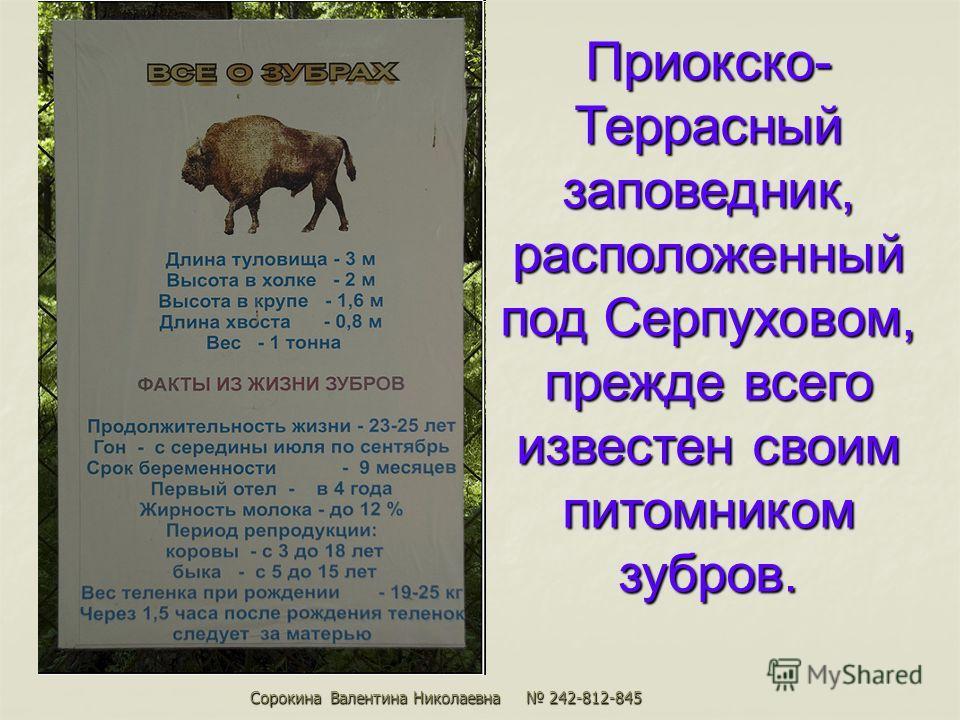 Приокско- Террасный заповедник, расположенный под Серпуховом, прежде всего известен своим питомником зубров. Сорокина Валентина Николаевна 242-812-845