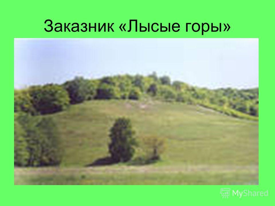 Заказник «Лысые горы»