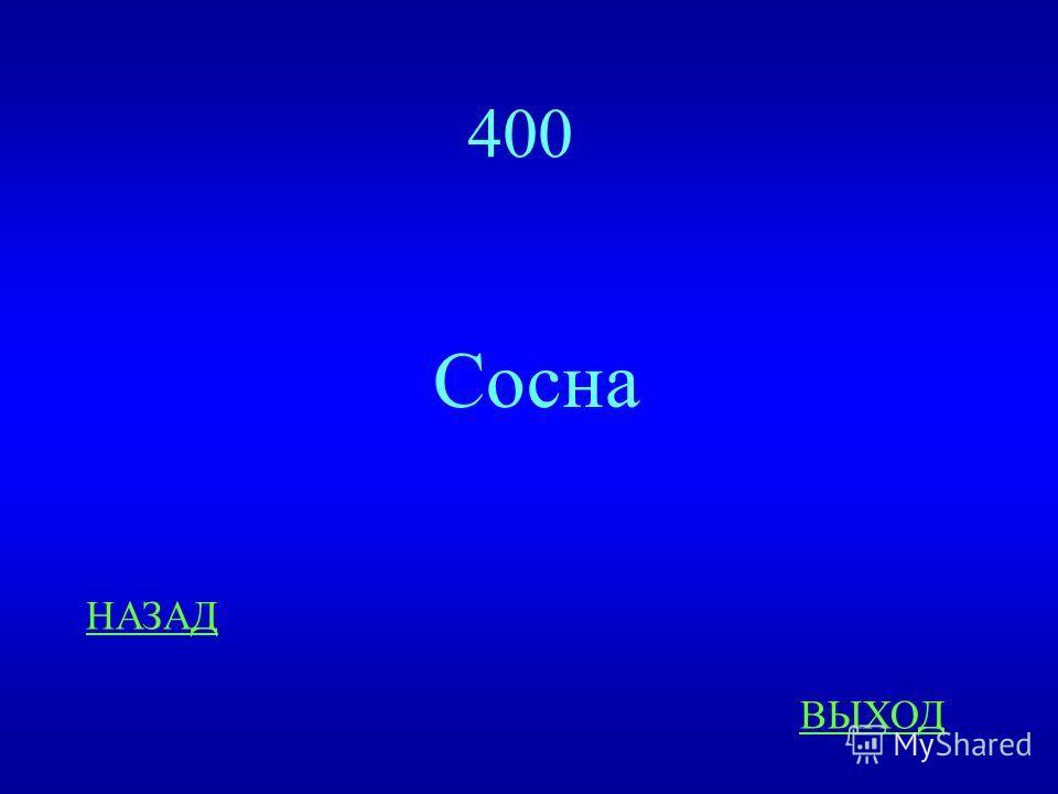 Живая природа 400 ответ Какое растение занимает ведущее место на реке Конда?