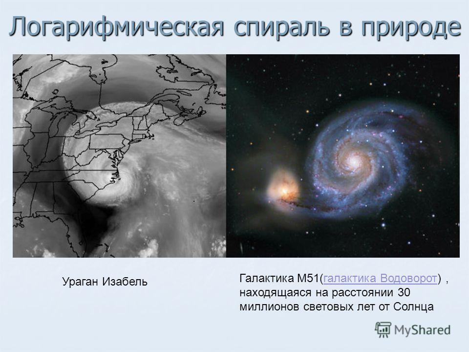 Логарифмическая спираль в природе Ураган Изабель Галактика M51(галактика Водоворот), находящаяся на расстоянии 30 миллионов световых лет от Солнцагалактика Водоворот