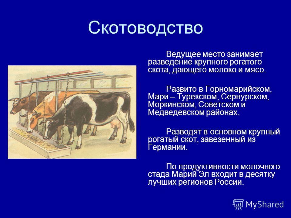 Скотоводство Ведущее место занимает разведение крупного рогатого скота, дающего молоко и мясо. Развито в Горномарийском, Мари – Турекском, Сернурском, Моркинском, Советском и Медведевском районах. Разводят в основном крупный рогатый скот, завезенный