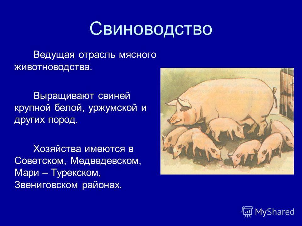 Свиноводство Ведущая отрасль мясного животноводства. Выращивают свиней крупной белой, уржумской и других пород. Хозяйства имеются в Советском, Медведевском, Мари – Турекском, Звениговском районах.