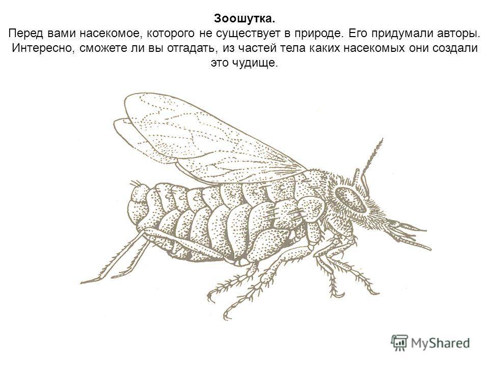 Зоошутка. Перед вами насекомое, которого не существует в природе. Его придумали авторы. Интересно, сможете ли вы отгадать, из частей тела каких насекомых они создали это чудище.