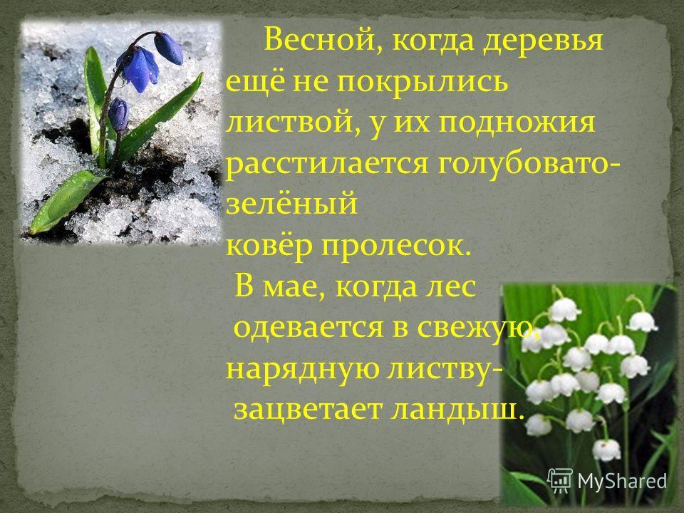 С западной окраины Борисоглебска лес виден во всём своём величии и красоте. Весной и летом он ласкает глаз яркой зеленью дубов и кустарников, осенью перед листопадом поражает обилием красок, которые щедро разбросаны по кронам деревьев. Лес не теряет