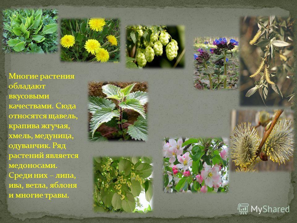 Каждый год заготовители собирают огромное количество листьев, корней и почек лекарственных растений, из которых потом вырабатываются кровеостанавливающ ие, сердечные, потогонные, отхаркивающие, усиливающие аппетит и пищеварительные микстуры, таблетки