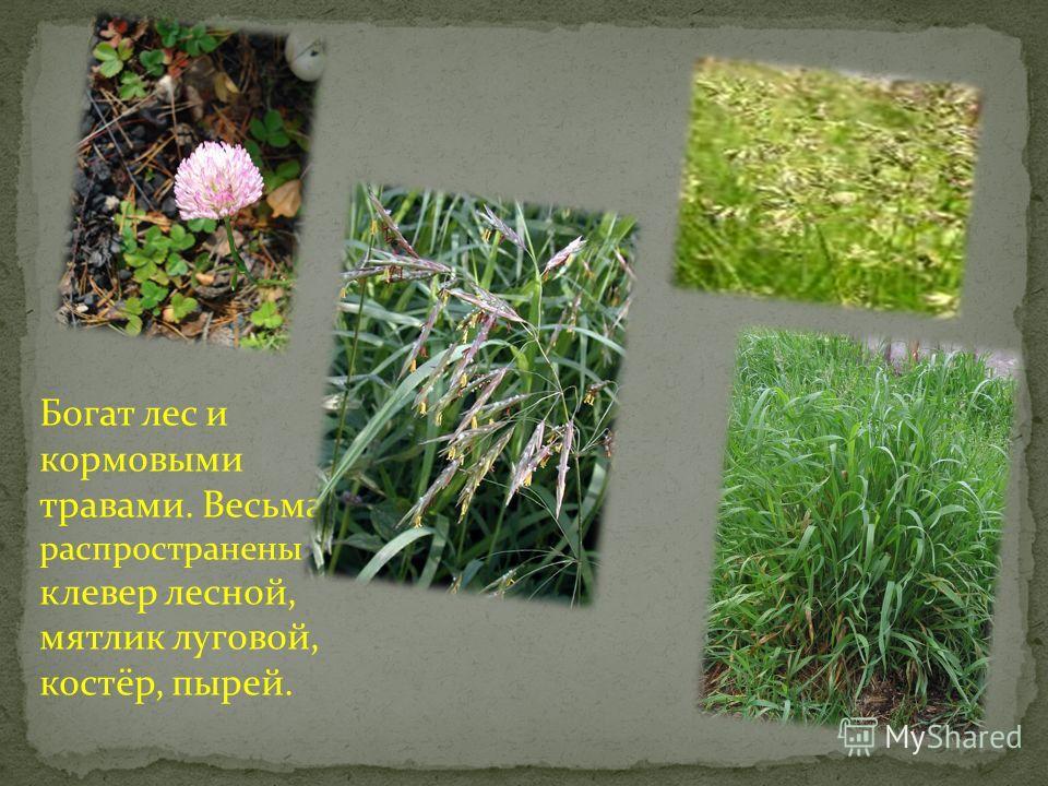 Многие растения обладают вкусовыми качествами. Сюда относятся щавель, крапива жгучая, хмель, медуница, одуванчик. Ряд растений является медоносами. Среди них – липа, ива, ветла, яблоня и многие травы.