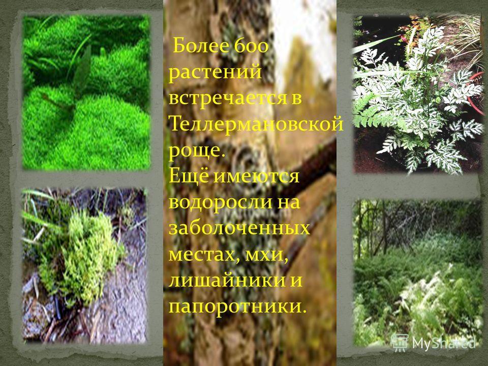 Растительность Теллермановского леса может служить сырьём для самых разнообразных отраслей промышленности и сельского хозяйства. Древесина лиственных пород при сухой перегонке даёт ценные химические продукты: парафин, нафталин. Из листьев, стеблей, ц