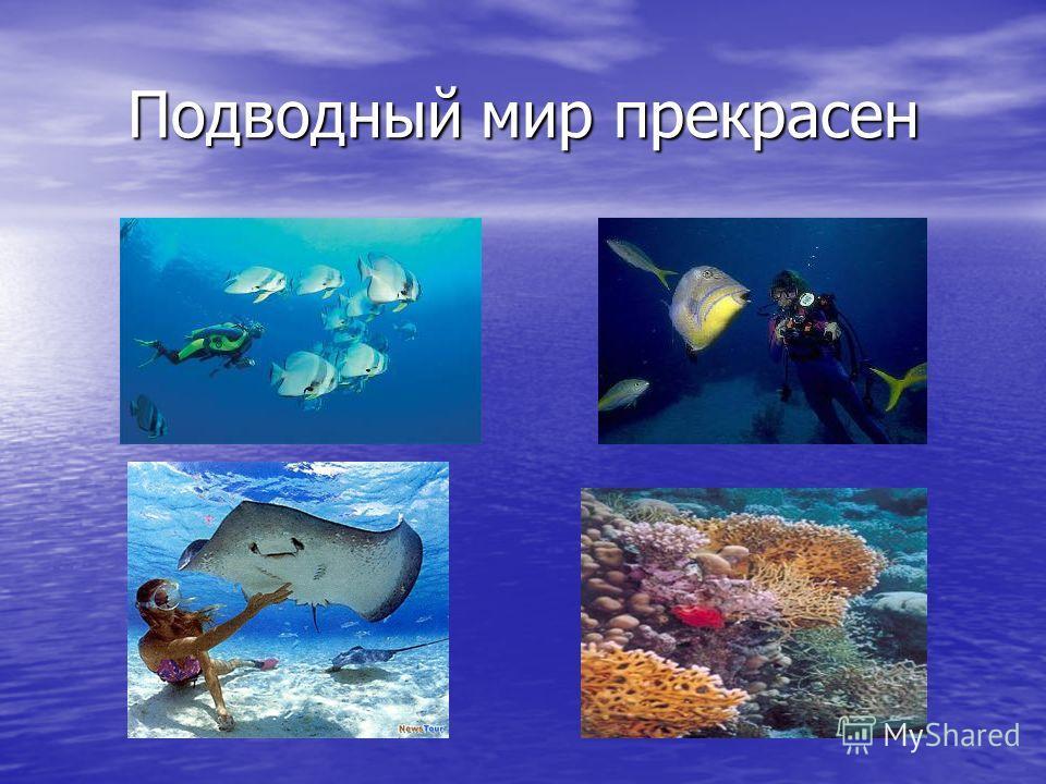 Подводный мир прекрасен