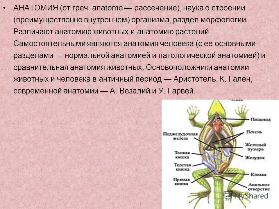 АНАТОМИЯ (от греч. anatome рассечение), наука о строении (преимущественно внутреннем) организма, раздел морфологии. Различают анатомию животных и анатомию растений. Самостоятельными являются анатомия человека (с ее основными разделами нормальной анат