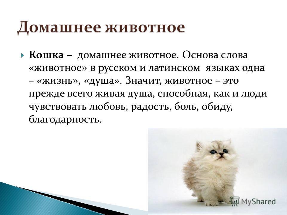 Кошка – домашнее животное. Основа слова «животное» в русском и латинском языках одна – «жизнь», «душа». Значит, животное – это прежде всего живая душа, способная, как и люди чувствовать любовь, радость, боль, обиду, благодарность.