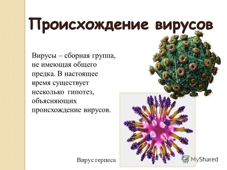 Вирусы сборная группа, не имеющая общего предка. В настоящее время существует несколько гипотез, объясняющих происхождение вирусов. Вирусы – сборная группа, не имеющая общего предка. В настоящее время существует несколько гипотез, объясняющих происхо