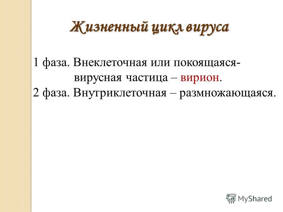 1 фаза. Внеклеточная или покоящаяся- вирусная частица – вирион. 2 фаза. Внутриклеточная – размножающаяся. Жизненный цикл вируса